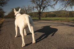 Hund auf Reise Stockbild