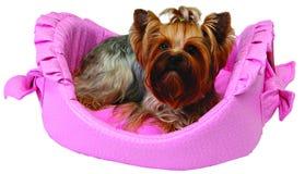 Hund auf rosafarbenem Bett Stockfoto