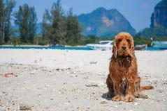 Hund auf Sand. Stockfotografie