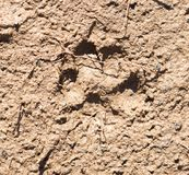 Hund auf Sandbahn Stockbilder