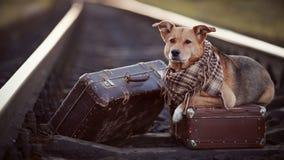 Hund auf Schienen mit Koffern Stockfotos
