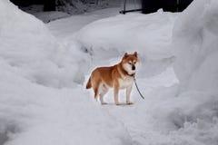 Hund auf Schnee lizenzfreie stockfotografie