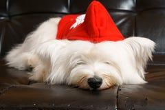 Hund auf Sofa Stockfotografie