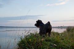 Hund auf Sonnenuntergang stockfoto
