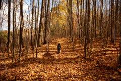 Hund auf Spur im Herbst Stockfoto