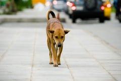 Hund auf Straße Stockfotografie