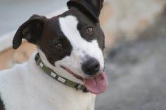 Hund auf Straße stockbilder