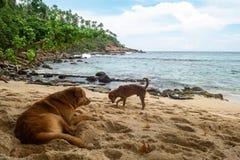 Hund auf Strand Stockbild