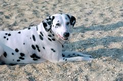 Hund auf Strand Lizenzfreie Stockfotografie
