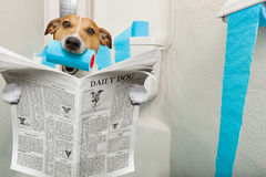 Hund auf Toilettensitz stockfoto