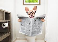 Hund auf Toilettensitzlesezeitung lizenzfreies stockfoto