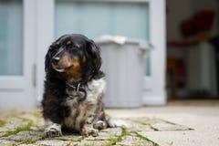 Hund aus den Grund stockfoto