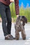 Hund av terriernärbilden royaltyfria bilder