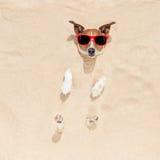 Hund begraben im Sand Stockfotografie