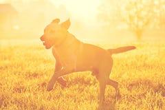 Hund bei dem Sonnenaufgang Stockbilder