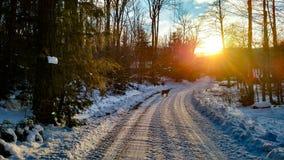 Hund bei Sonnenuntergang Stockfoto