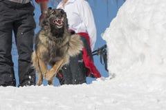 Hund beim Laufen auf dem Schnee lizenzfreie stockbilder