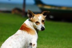 Hund, bester Freund des Menschen überhaupt Stockbild