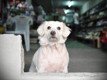 Hund Blick-auf an einer Straße Stockfoto