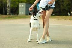 Hund border collie stockbilder