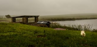 Hund bredvid sjön Arkivbild