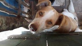 Hund bredvid staketet Royaltyfri Bild