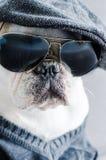 Hund, Bulldogge mit Kappe, Kleid und Gläser Lizenzfreie Stockbilder