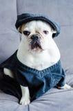 Hund, Bulldogge mit Kappe, Kleid und Gläser Lizenzfreie Stockfotografie