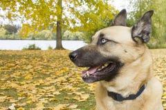 Hund Byron Stockfoto