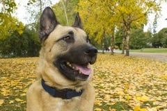 Hund Byron Stockbild