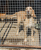 Hund caged under solen Royaltyfria Foton