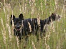 Hund in den Ährchen lizenzfreie stockbilder