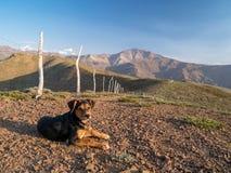 Hund in den Anden Lizenzfreies Stockfoto