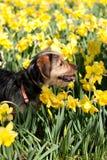 Hund in den Blumen Lizenzfreies Stockfoto
