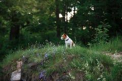 Hund in den Blumen in einem Park auf der Natur Stockbilder