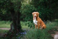 Hund in den Blumen in einem Park auf der Natur Lizenzfreie Stockbilder