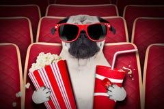 Hund an den Filmen Stockbild