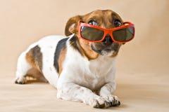 Hund in den Gläsern Stockbilder
