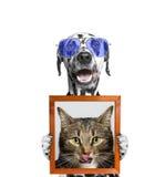 Hund in den Gläsern hält ein Porträt der Katze in seinen Tatzen Lizenzfreies Stockfoto