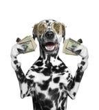 Hund in den Gläsern hält in seinen Tatzen viel Geld lizenzfreie stockfotos