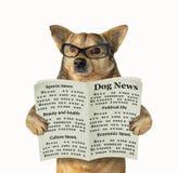 Hund in den Gl?sern liest eine Zeitung stockfoto