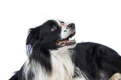 Hund in den Gläsern sieht wie Lehrer oder Professor aus lizenzfreies stockfoto