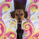 Hund, den Kopf aus einer Balustrade heraus stoßend Lizenzfreies Stockbild