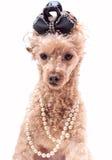 Hund in den Perlen Lizenzfreie Stockbilder