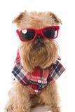 Hund in den roten Gläsern lizenzfreies stockfoto