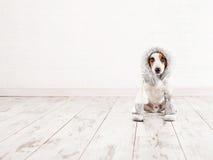 Hund in den Socken lizenzfreie stockfotos