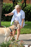 Hund, der 03 ausbildet Stockbilder