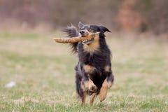Hund in der Aktion lizenzfreie stockfotos