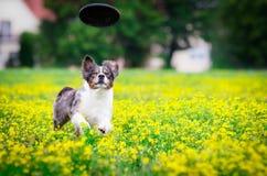 Hund in der Aktion lizenzfreies stockbild