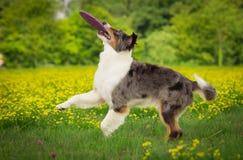 Hund in der Aktion lizenzfreies stockfoto